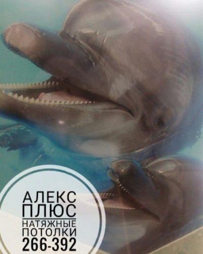 Фотопечать с дельфинами на потолке